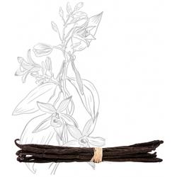 10 gousses - Vanille Bourbon de Madagascar – Gourmet & Bio - Max Daumin