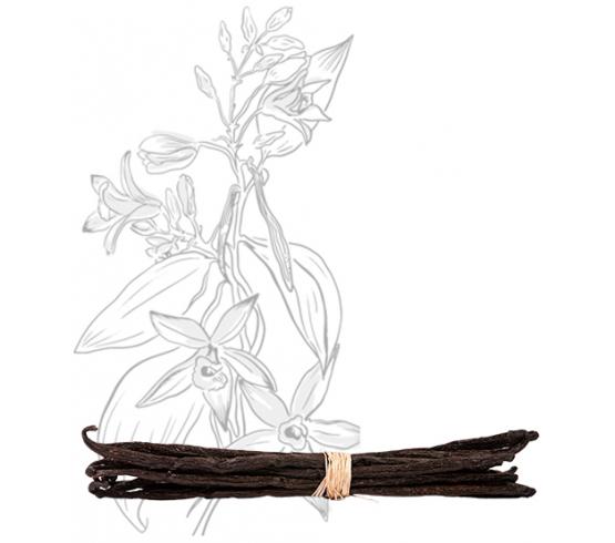 10 gousses - Vanille Bourbon de Madagascar – Gourmet & Bio