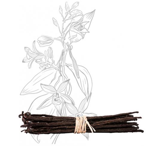 20 gousses - Vanille Bourbon de Madagascar – Gourmet & Bio
