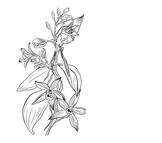 Sel Rose de l'Himalaya - Cristaux