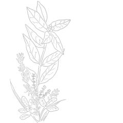 Bouquet Garni de France