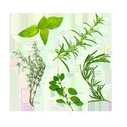 Herbes de Provence de Provence