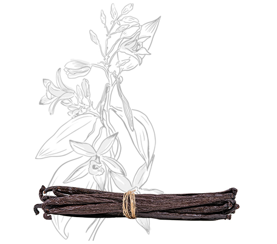10 gousses - Vanille Tahitensis – 18cm
