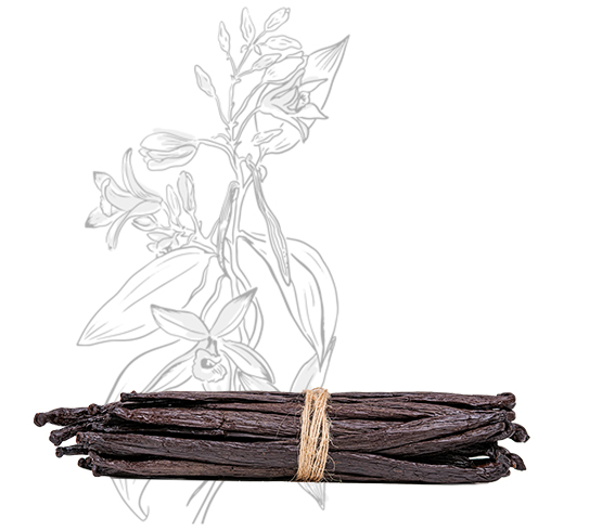 30 gousses - Vanille Tahitensis – 18cm