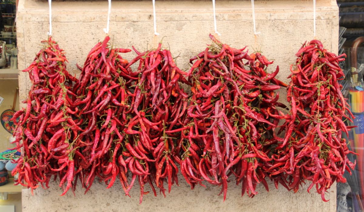 Le Paprika ou le piment venu de l'est